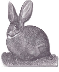 Highly Endangered Riverine Rabbit