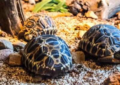 Tortoises as Pets