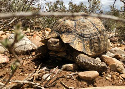 Tortoises & Terrapins