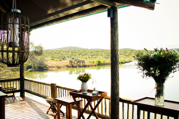 Buffelsdrift Game Lodge Activities