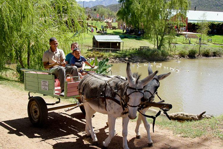 Donkey Cart Rides